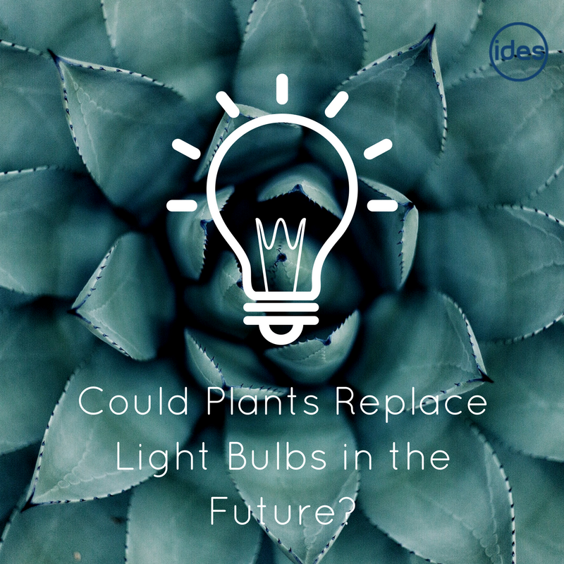 Images from an IDES blog post talking about the future of lighting, LED lighting and the possibility of plant powered lighting!